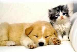 Top 2 loại vải bọc ghế sofa dành cho nhà có chó hoặc mèo